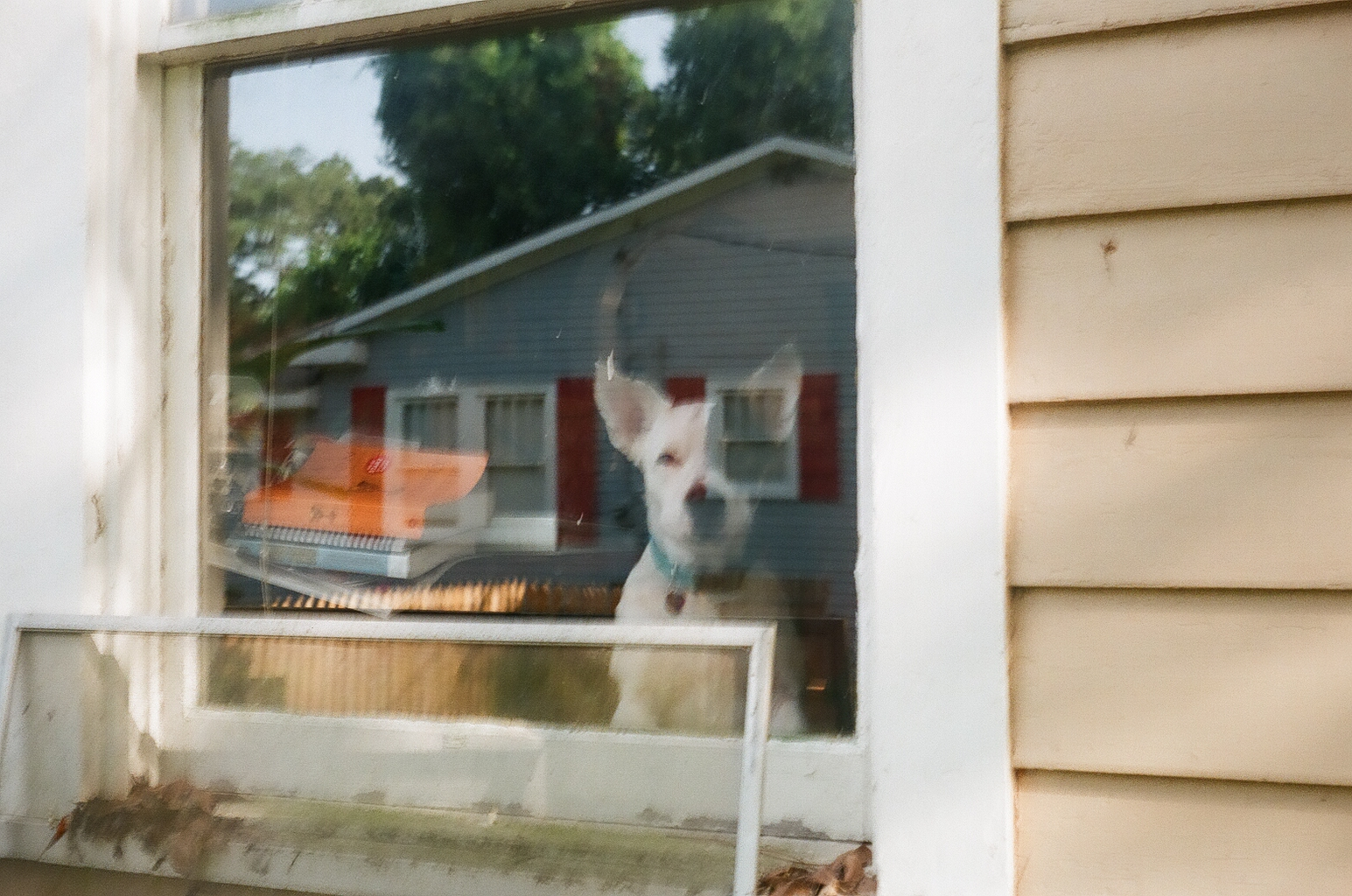 Stella looking through the front window at me