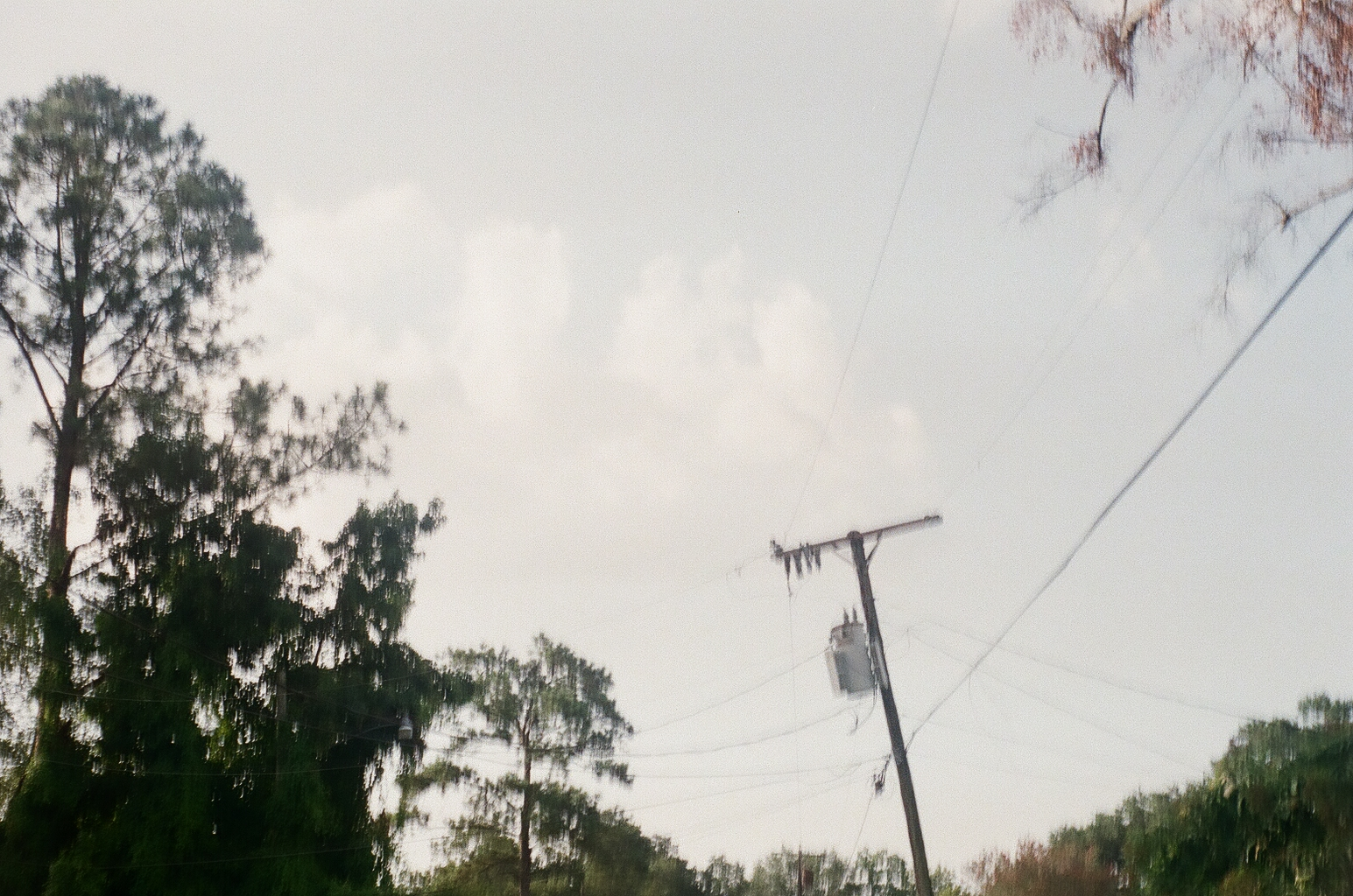 Telephone pole, trees, and attempted clouds